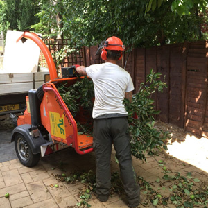 Tree Surgeon Wallingford