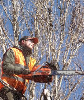 Tree Surgeon Didcot